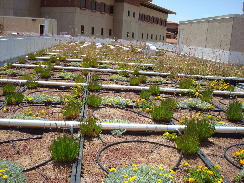 Rooftop of the Biology building at UTEP. (Theresa Valenzuela/Borderzine.com)