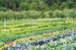 Cider Mills Organic Farm, High Rolls, New Mexico. (Cheryl Howard/Borderzine.com)