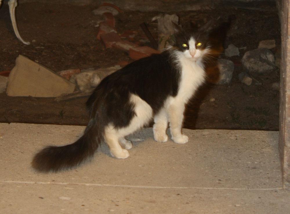 The cat thief, caught. (Cheryl Howard/Borderzine.com)