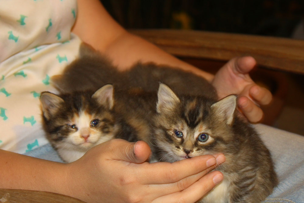 Josie taming kittens. (Cheryl Howard/Borderzine.com)