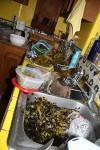 The big, beautiful mess of peeling chiles. (Cheryl Howard/Borderzine.com)