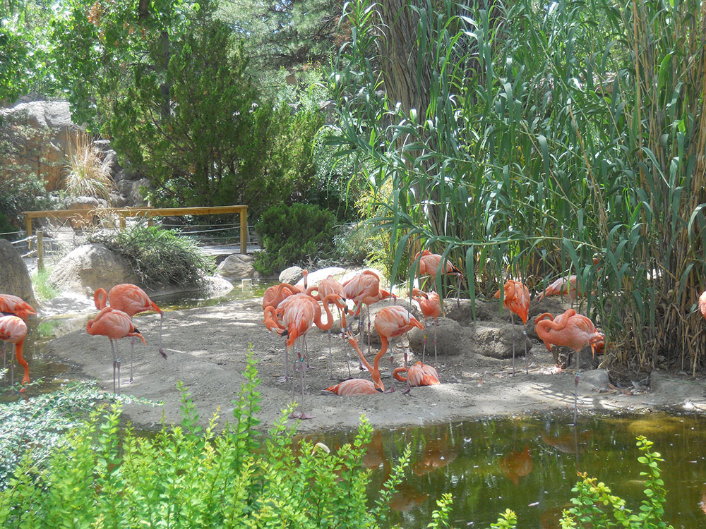The flamingos were one of the main attractions at the zoo. (©Selene Soria)
