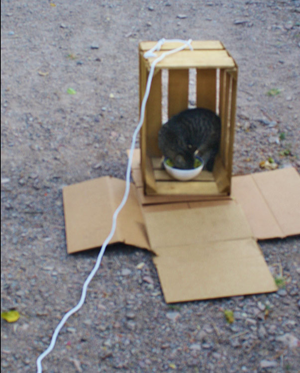 Tripper in the trap. (Cheryl Howard/Borderzine.com)