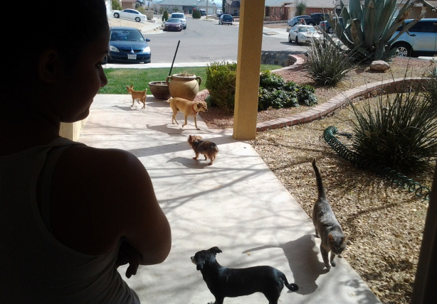 Andrea Castro checks on five of her 13 non-human family members. (Azucena Santos/Borderzine.com)