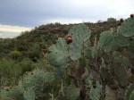 """A Starr County se le denomina """"El País de las Colinas del Valle del Río Grande"""". (Sergio Chapa/Borderzine.com)"""