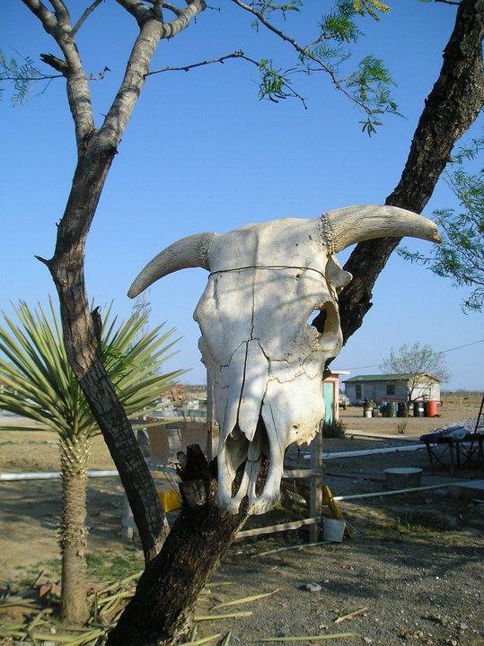 Cattle skull at a small town that leads to Guerrero Viejo, Tamaulipas. (Sergio Chapa/Borderzine.com)