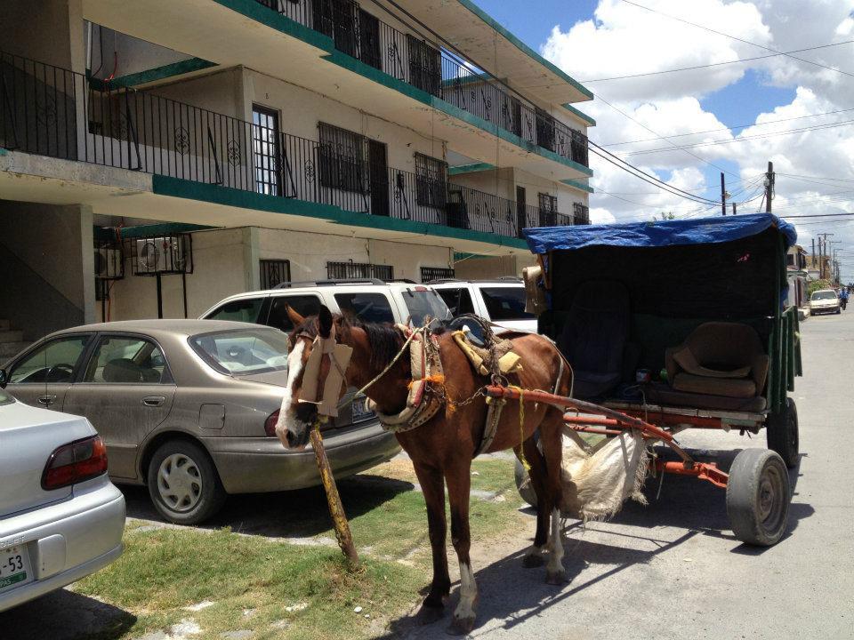 En Reynosa, Tamaulipas, la basura se recolecta usando carretas tiradas por caballos. (Sergio Chapa/Borderzine.com)
