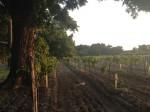 A vineyard just south of downtown Del Rio. (Sergio Chapa/Borderzine.com)