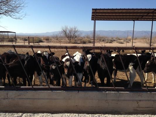 The Lineup Licon Dairy Farm