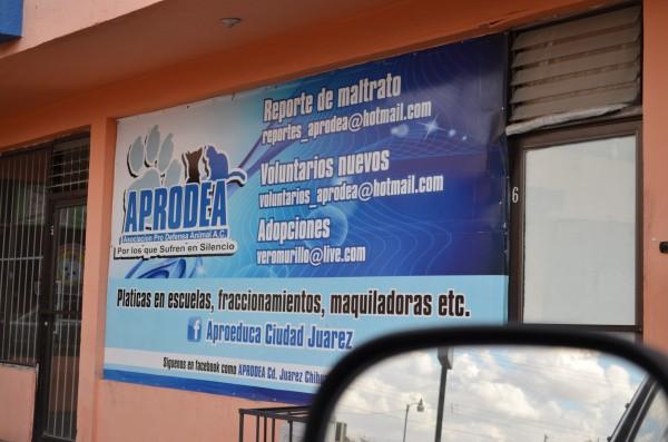 El estudio de la Asociación Pro Defensora de Animales (APRODEA), UNAM y el Programa Pedigree Adóptame, identificó 60 mil perros en abandono total.