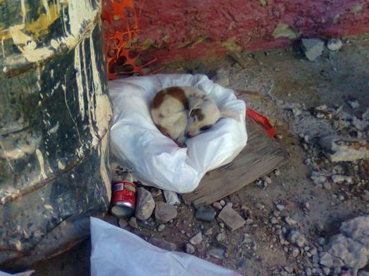 Edmundo Dagoberto Escobedo Zubia encontró a este cachorro durmiendo en la calle.