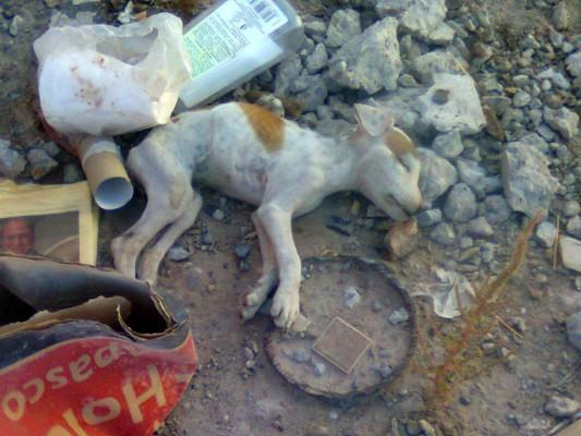 Escobedo Zubia no pudo ocultar su frustración e impotencia al encontrar al cachorro muerto al día siguiente.
