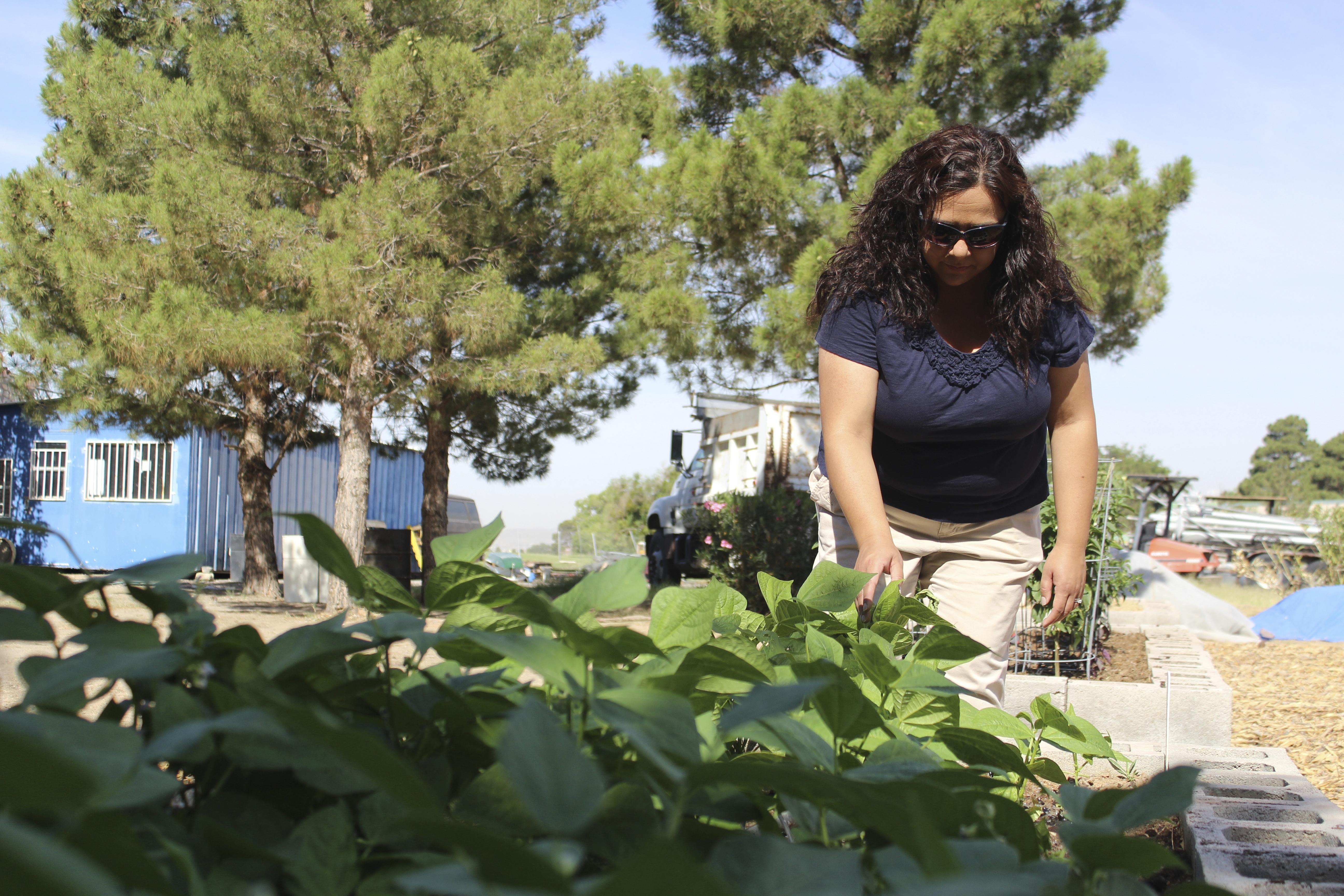 denise rodriguez organized el paso countys first community garden in ascarate park the garden has - The Garden El Paso