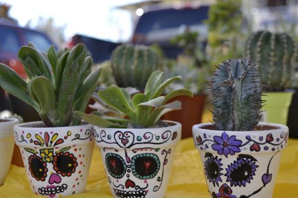 Cacti and Calaveras