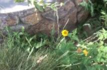 desert_weeds