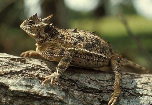 Lizard_Point2.jpg