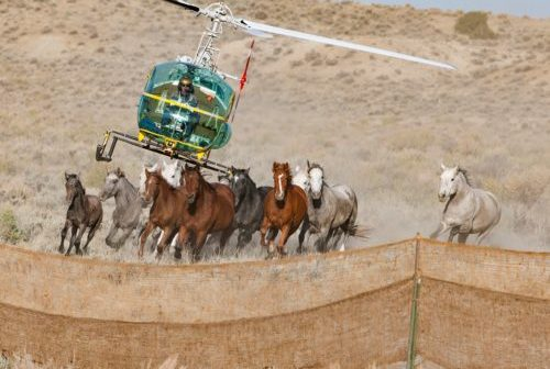 Federal moves to rein in wild horses raising concerns for the American West
