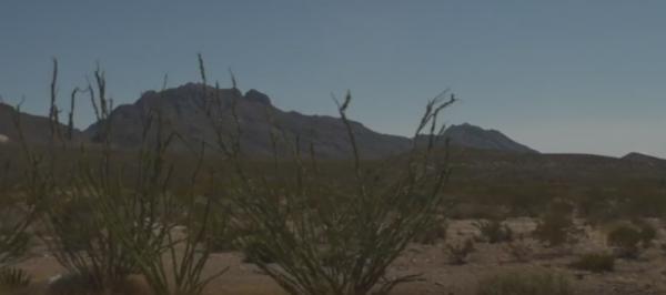 Desert plants, landscape