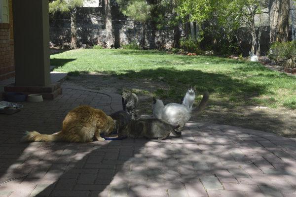 Cats4.jpg