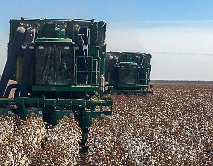 In San Elizario, Texas, residential growth competes with cotton farming for land