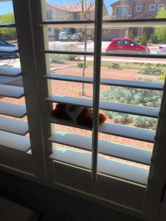 "Julie RL‎ posted this little bear she had in her window to the Facebook group MOB - Families for El Paso.In March, people posted teddy bears for a ""bear hunt"" that children could discover on walks."